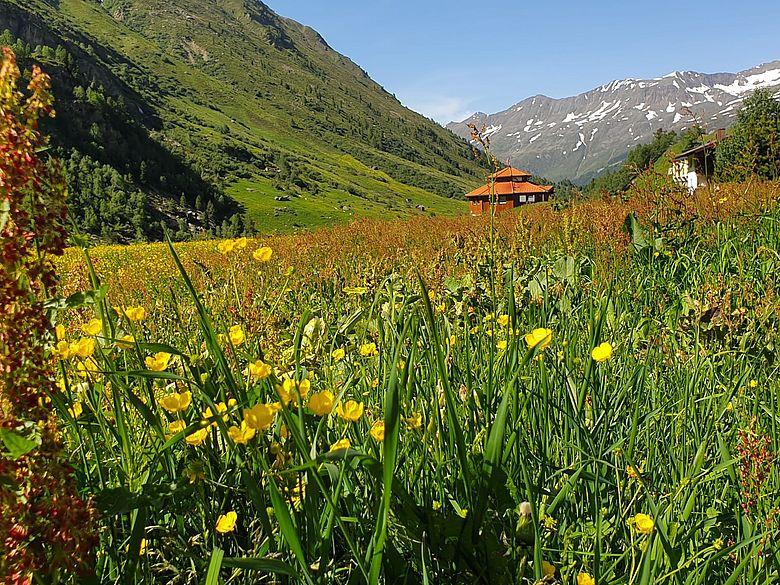 """Mit ihrem Motto """"Grenzen und Übergänge"""" beschreibt die 5. Österreichische Citizen Science Konferenz in Obergurgl auch die Vegetationszonen der umliegenden Alpenlandschaft. Foto: Wiebke Brink / WiD"""
